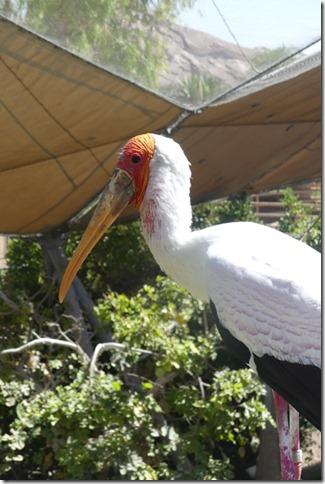 Zoo Al Ain (106)