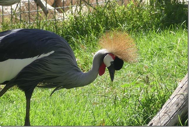 Zoo Al Ain (115)