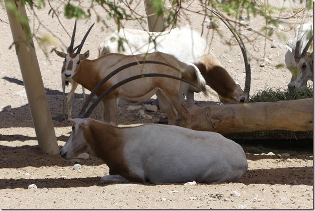 Zoo Al Ain (125)