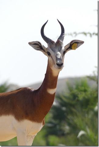 Zoo Al Ain (12)