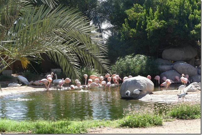 Zoo Al Ain (151)