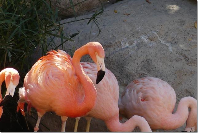 Zoo Al Ain (153)