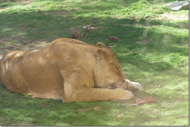 Zoo Al Ain (157)