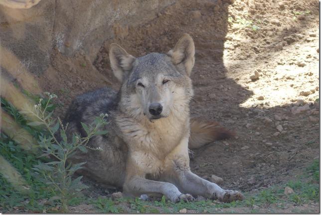 Zoo Al Ain (162)