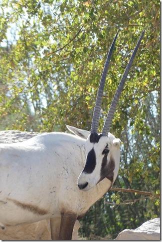 Zoo Al Ain (164)