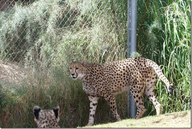 Zoo Al Ain (19)