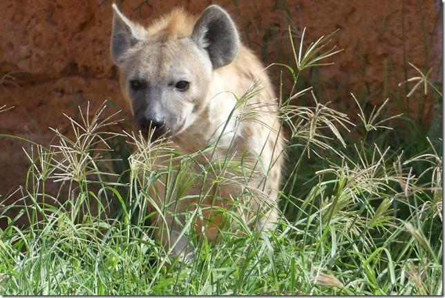 Zoo Al Ain (35)