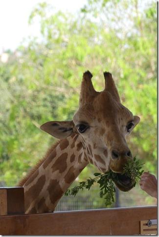 Zoo Al Ain (36)