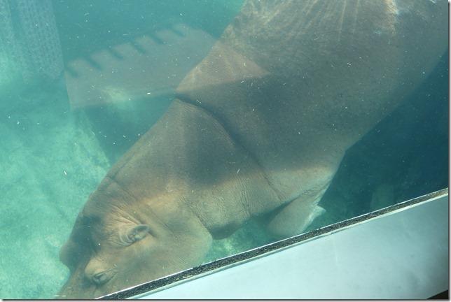 Zoo Al Ain (57)