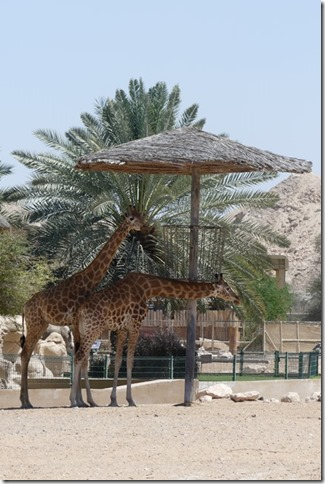 Zoo Al Ain (83)