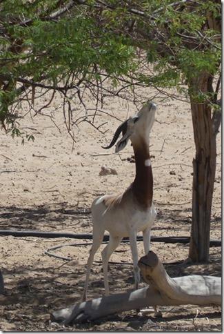 Zoo Al Ain (89)