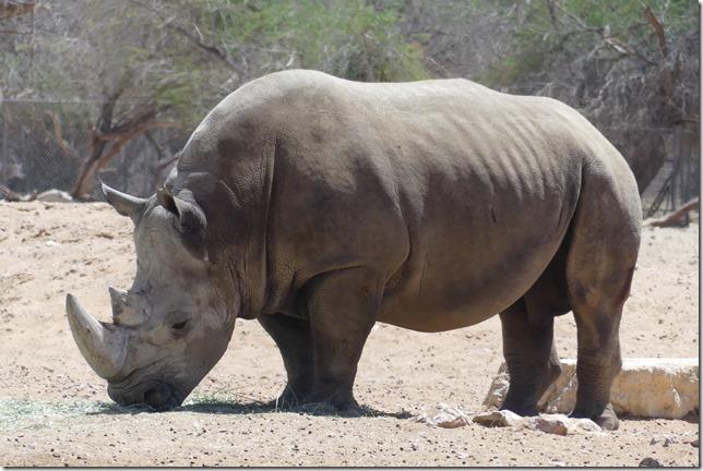 Zoo Al Ain (94)