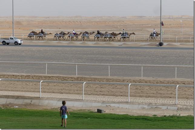 Camel race track (14)