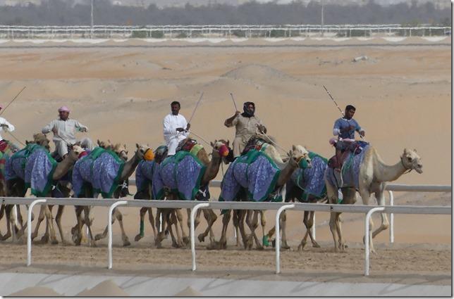 Camel race track (18)