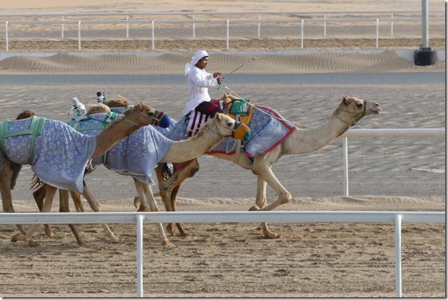 Camel race track (7)