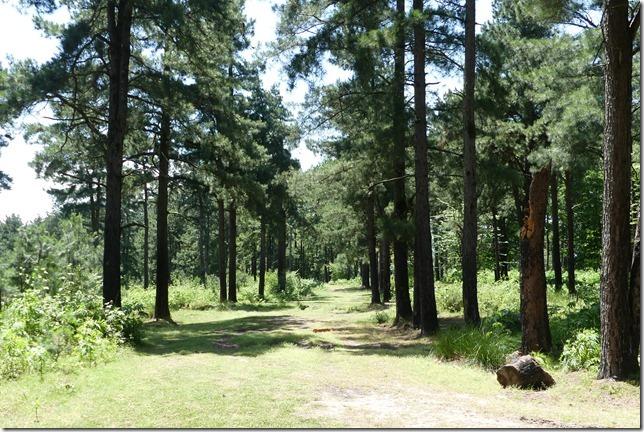 Dans la forêt (11)
