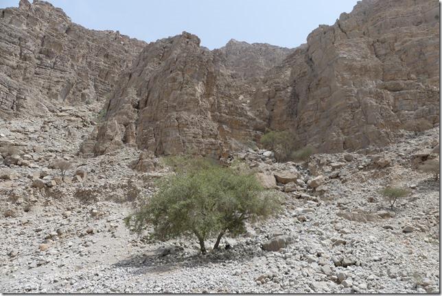 Djebel Jais (29)