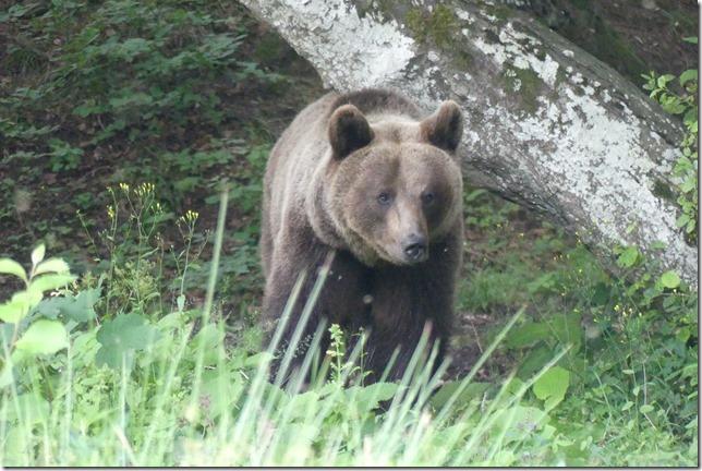 Busteni - Vallée aux ours (18)