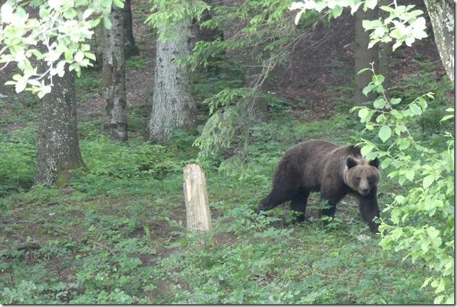 Busteni - Vallée aux ours (19)