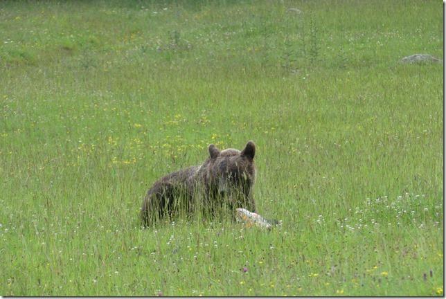 Busteni - Vallée aux ours (1)