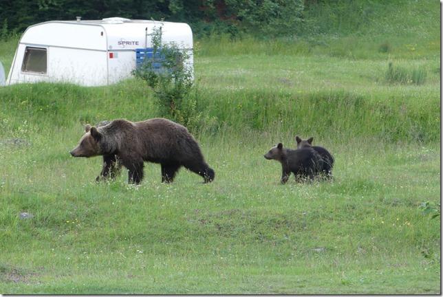 Busteni - Vallée aux ours (28)