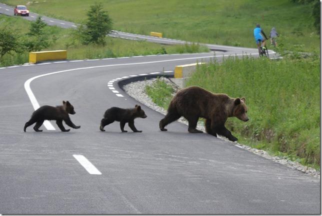 Busteni - Vallée aux ours (34)