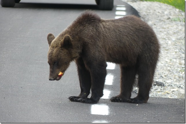 Busteni - Vallée aux ours (46)