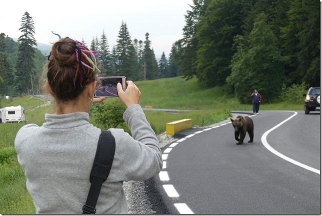 Busteni - Vallée aux ours (50)
