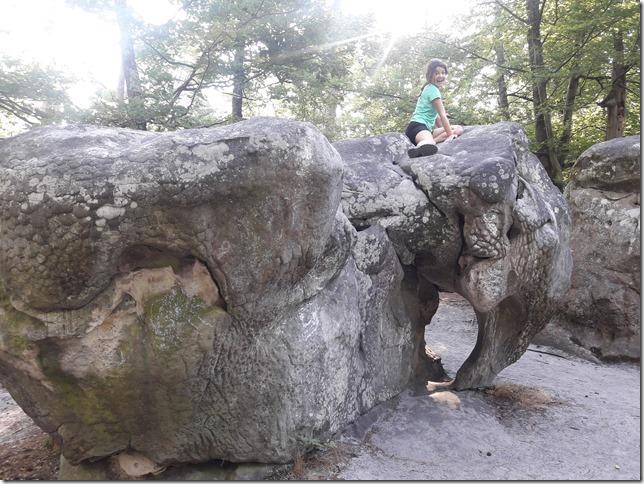 Forêt de Fontainebleau (1)