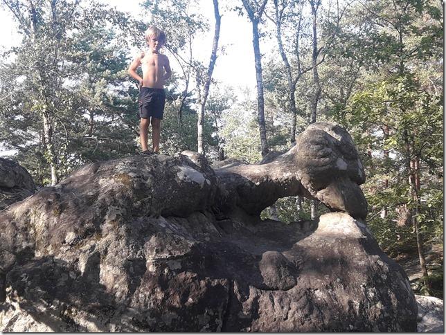 Forêt de Fontainebleau (5)