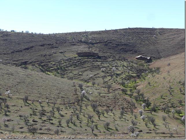 Route Igherm - Tafraout (12)