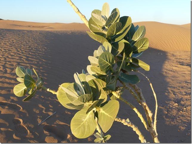 Vallée du Draa - Mhamid- Mbark desert camp (112)
