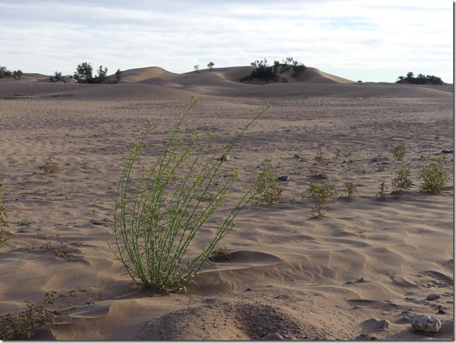 Vallée du Draa-désert Mhamid (7)
