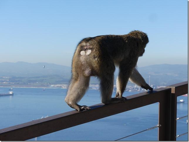 Gibraltar (101)