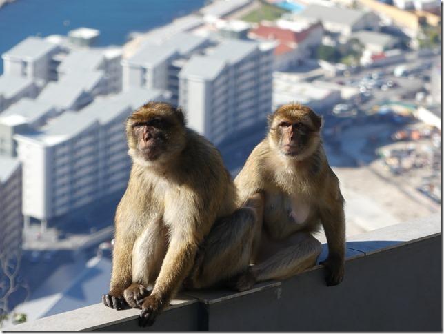Gibraltar (116)