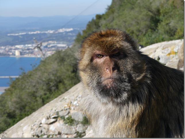 Gibraltar (130)