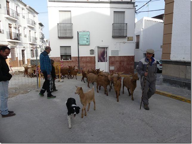 El Burgo (15)