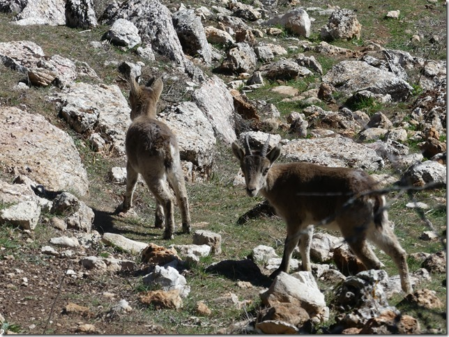 Parc naturel El Torcal (46)