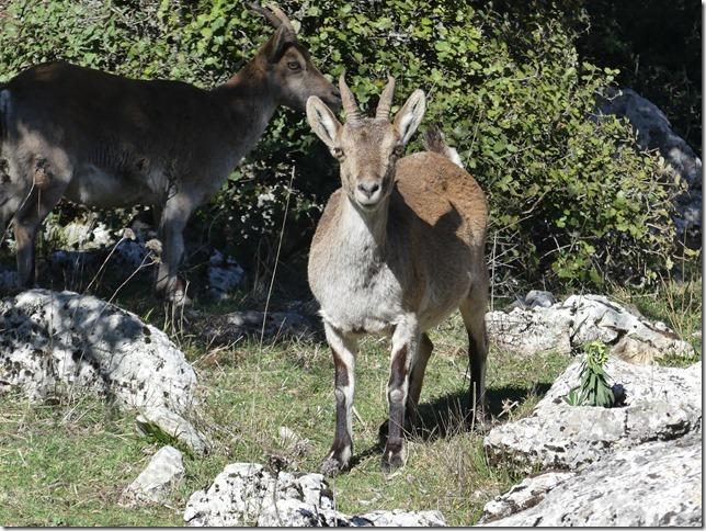 Parc naturel El Torcal (82)