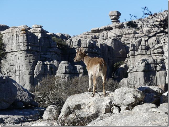 Parc naturel El Torcal (84)