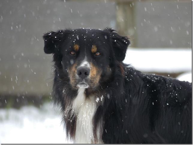 Charmey sous la neige (20)