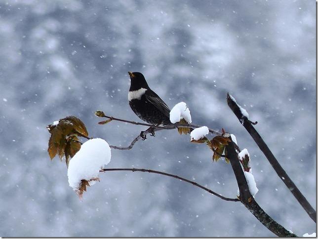 Charmey sous la neige (31)