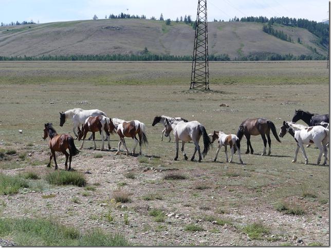 Sur la route - Altaï (121)