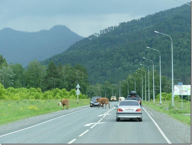 Sur la route - Altaï (13)