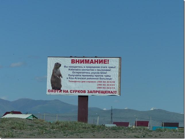 Sur la route - Altaï (142)