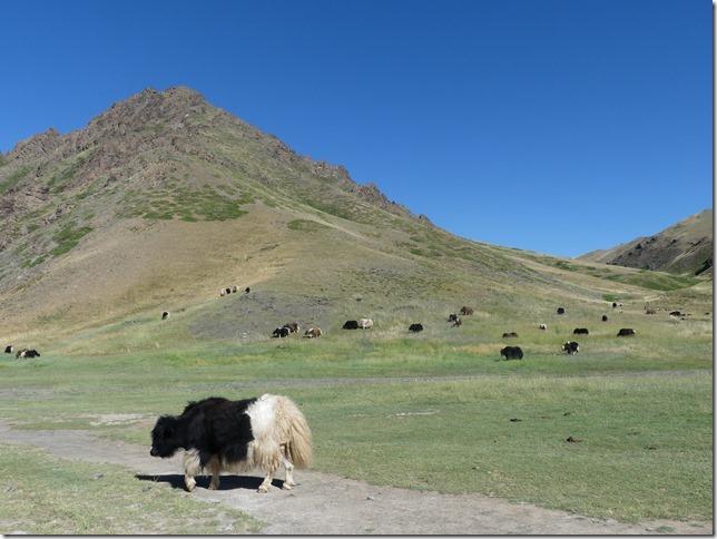 Désert du Gobi -Canyon Yoliin Am (19)