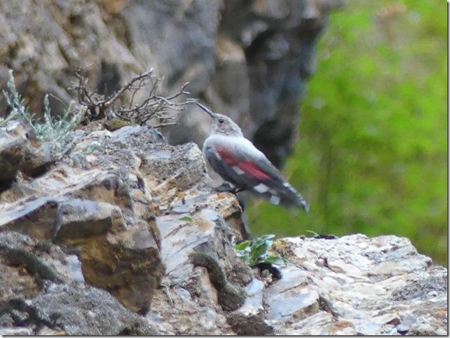Désert du Gobi -Canyon Yoliin Am (54)