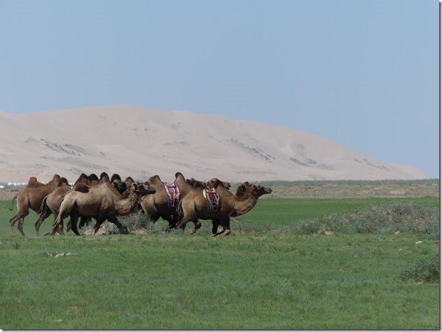 Désert du Gobi - Dunes de Khongoryn Els (139)