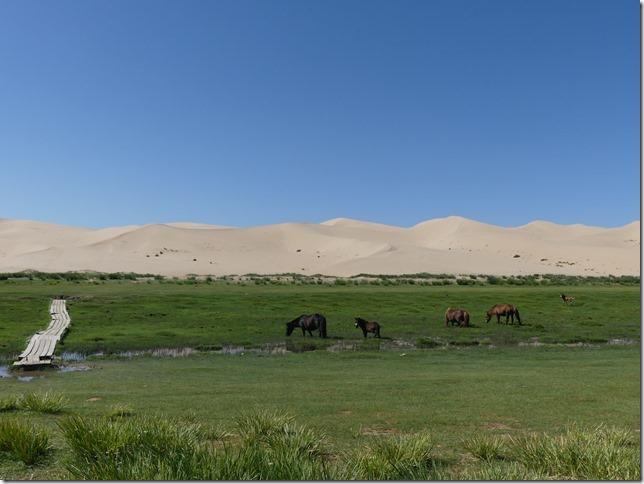 Désert du Gobi - Dunes de Khongoryn Els (141)