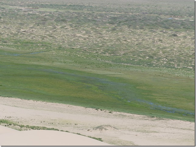 Désert du Gobi - Dunes de Khongoryn Els (155)